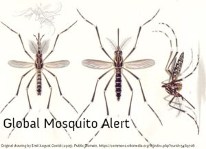 Global Mosquito Alert